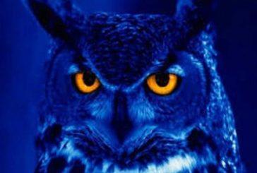 KAKO sova vidi noću?